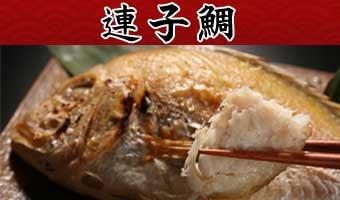 山陰沖日本海産連子鯛