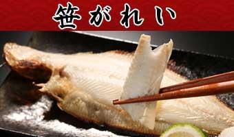 山陰沖日本海産笹ガレイ