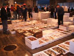 早朝5時。魚市場に行っても、良い魚が無い時は10分で帰る事もあります。